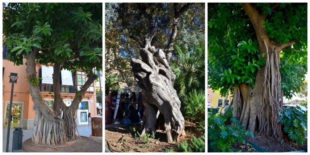 Mallorca trees