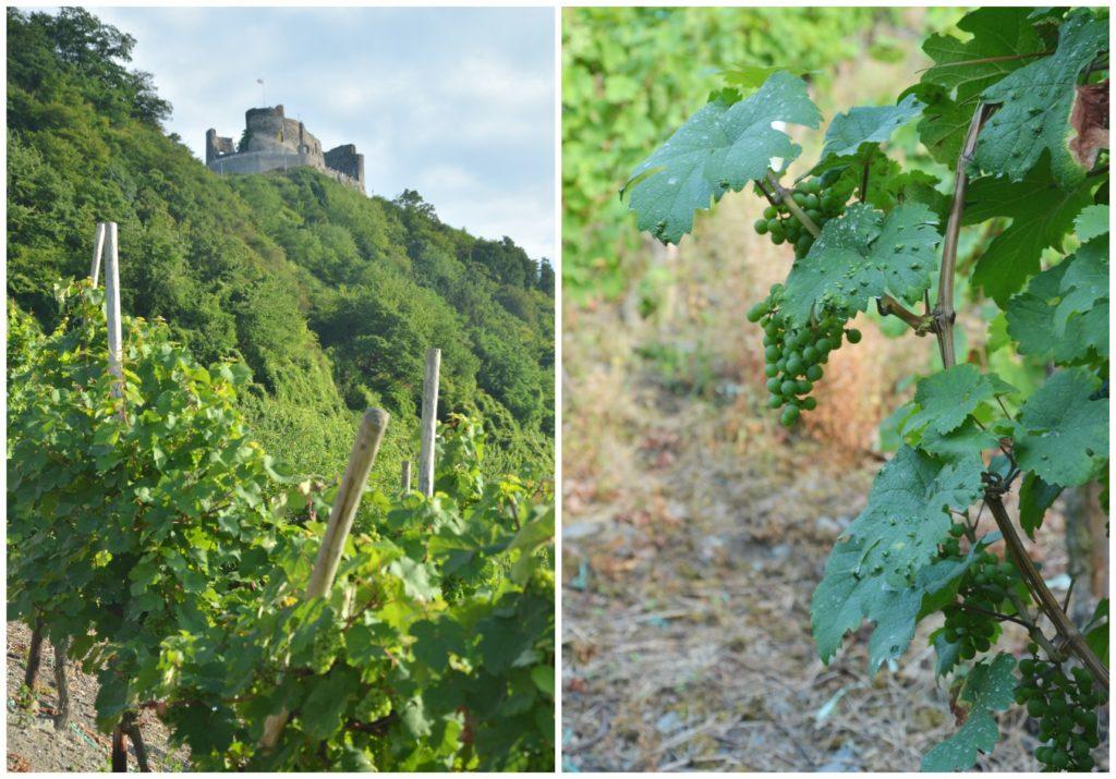 cesta na Olymp se táhne vinicemi, Bernkastel-Kues