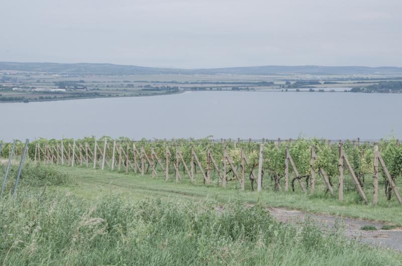 Jižní Morava má krom cyklostezek, zámků a přírodních krás také ideální podmínky pro pěstování vinné révy a tak si tu také milovníci vína přijdou na své.